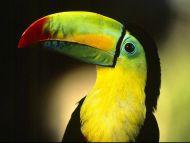 Toucan Profile