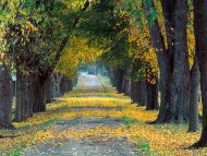 Tree Lined Roadway, Louisville, Kentucky