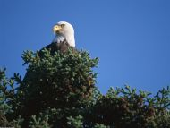 View from the Top, Bald Eagle, Alaska