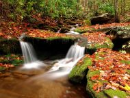 wesser creek in autumn nantahala national forest north carolina