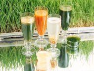 Wheat Juice