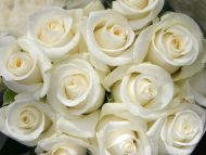 Desktop Wallpapers Flowers Backgrounds White Roses Www
