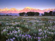 Wild Mountain, Owens Valley, California