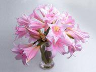 Desktop Wallpapers Flowers Backgrounds Wild Pink Lilies In Vase