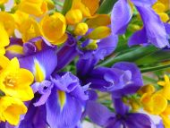 Desktop Wallpapers Flowers Backgrounds Yellow And Purple Flowers